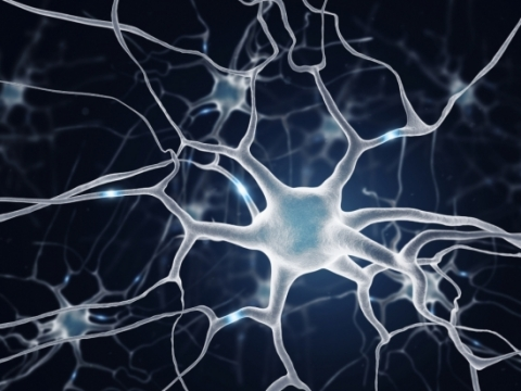 Neurons Keeping Us on the Right Track